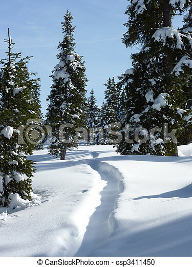 Fir trees by winter - csp3411450
