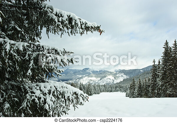 Fir trees on winter mountain - csp2224176