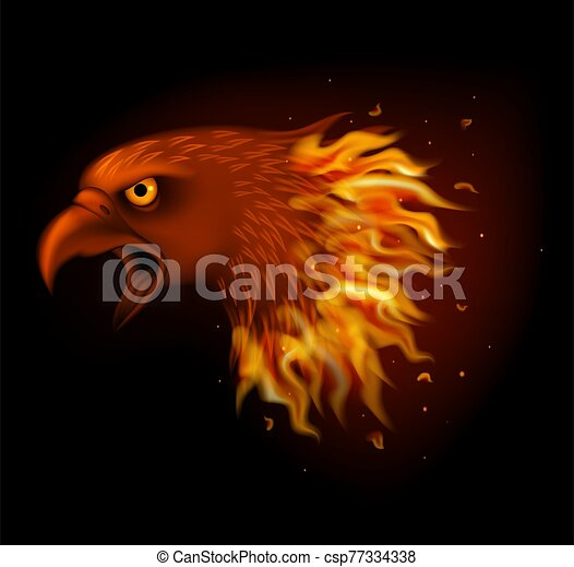 Fire eagle head isolated on black background - csp77334338