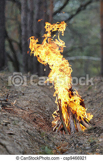 Fire in the wood on nature. - csp9466921