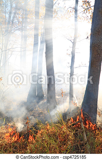 fire in wood - csp4725185