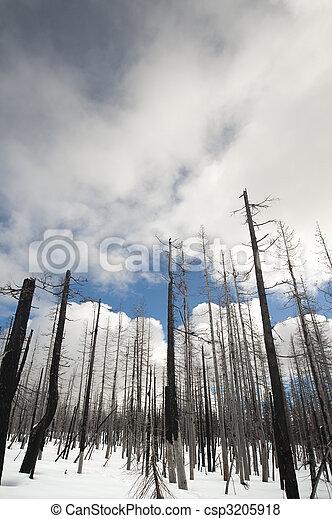 Feuergeschnitzte Bäume in Yellowstone - csp3205918