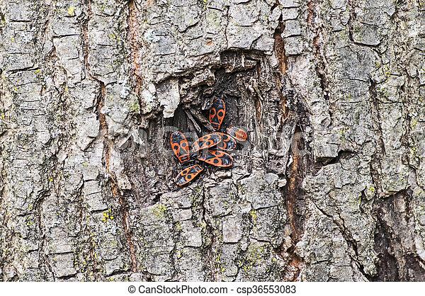 Firebugs on a tree - csp36553083