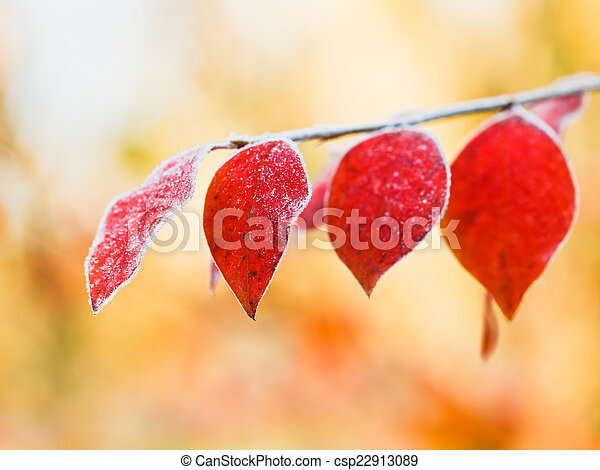 first frost on red leaves in autumn - csp22913089