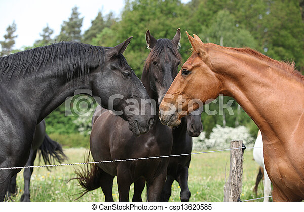 First meeting chestnut horse with the others - csp13620585