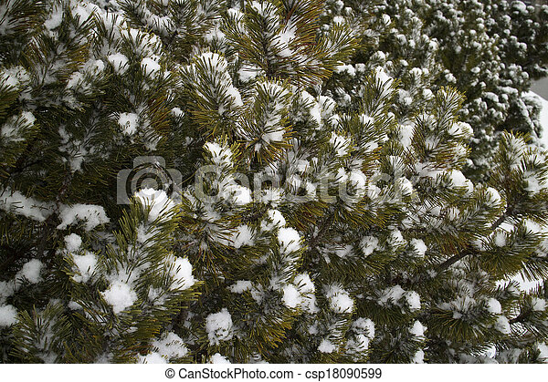 First Snow - csp18090599