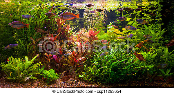 fische s wasser ttropical aquarium sch ne tropische gepflanzt gr n aquarium fische. Black Bedroom Furniture Sets. Home Design Ideas