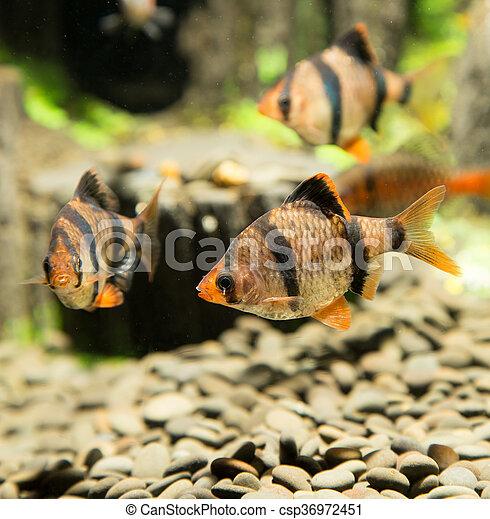 fish, 水族館 - csp36972451