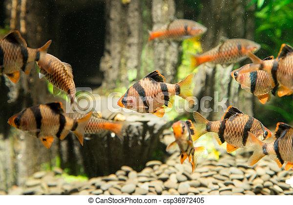 fish, 水族館 - csp36972405