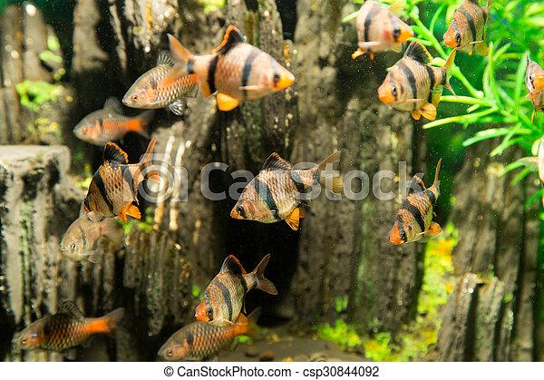 fish, 水族館 - csp30844092