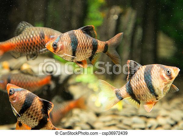 fish, 水族館 - csp36972439