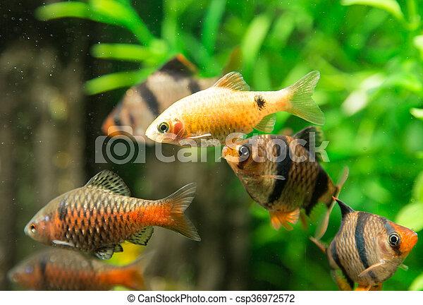 fish, 水族館 - csp36972572