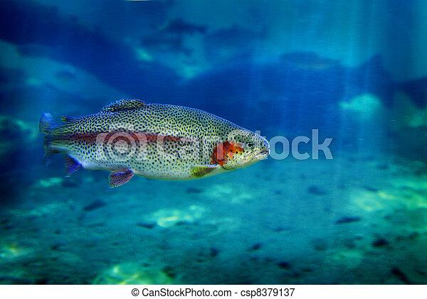 fish, 송어, 수영 - csp8379137