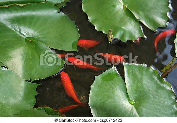 Fish and Lily Pads - csp0712423