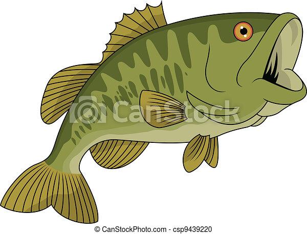 fish, basse - csp9439220