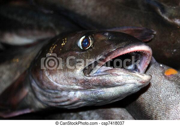 Fish Catch - csp7418037