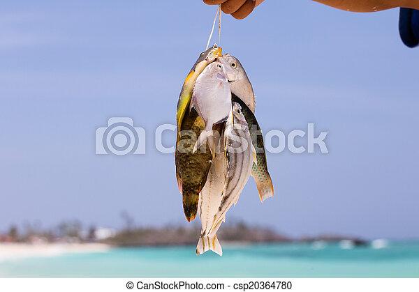 Fish catch - csp20364780