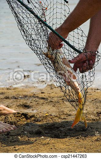fish catch - csp21447263