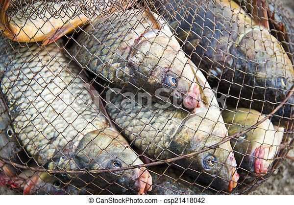 fish catch - csp21418042