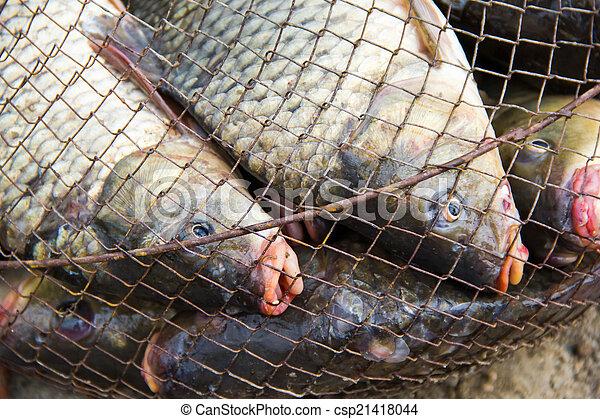 fish catch - csp21418044