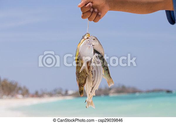 Fish catch - csp29039846