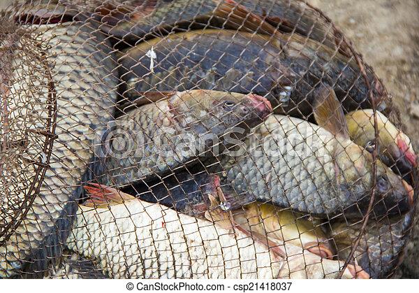 fish catch - csp21418037