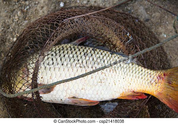 fish catch - csp21418038