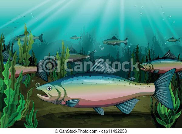 fish - csp11432253