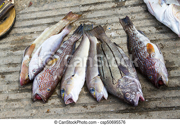 Fish from the day's catch - csp50695576