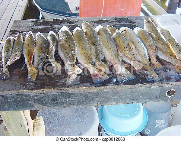Fish Fry Time - csp0012060