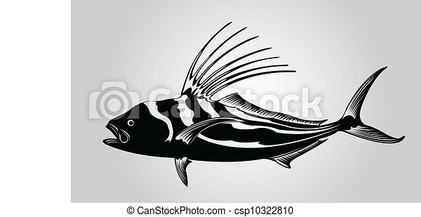 fish., galo - csp10322810
