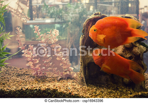 Fish in a tank - csp16943396
