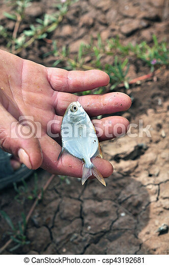 Fish in the hand - csp43192681