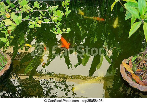 fish in the pond - csp35058498