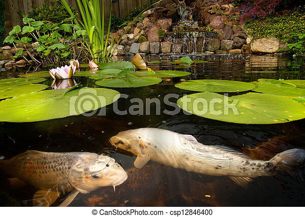 Fish in the pond - csp12846400