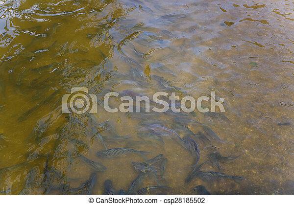 Fish in the pond Thailand - csp28185502