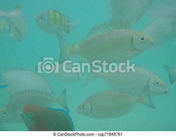Fish in the sea - csp71848761