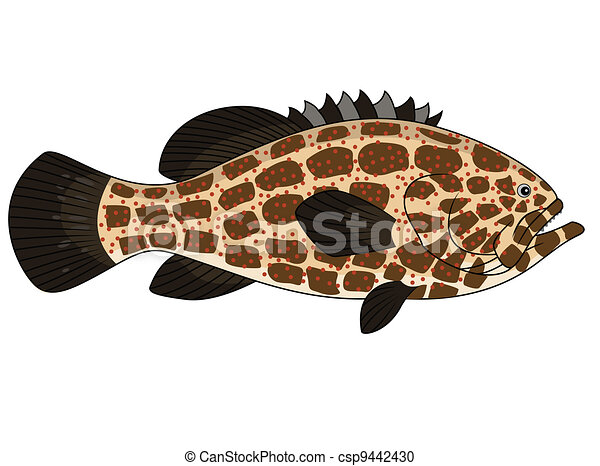 fish, mérou - csp9442430