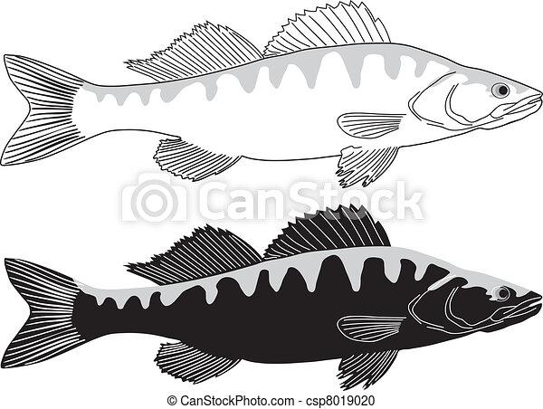 Fish - Pike perch - csp8019020