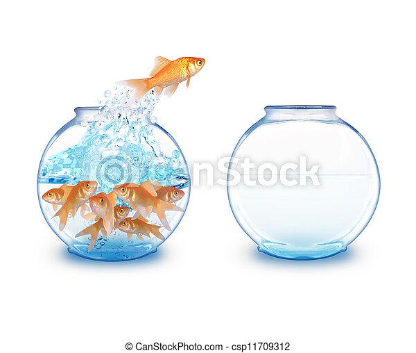 fish, sauter, bol, vide, or - csp11709312