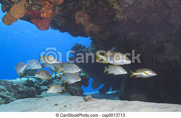 Fish Schooling - csp0013713