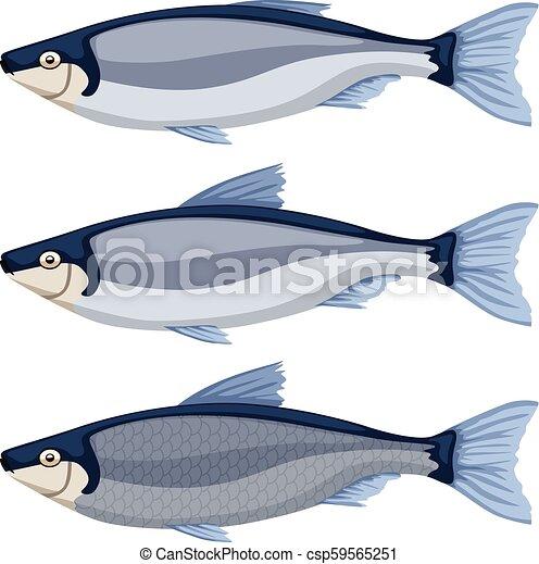 fish set on white - csp59565251