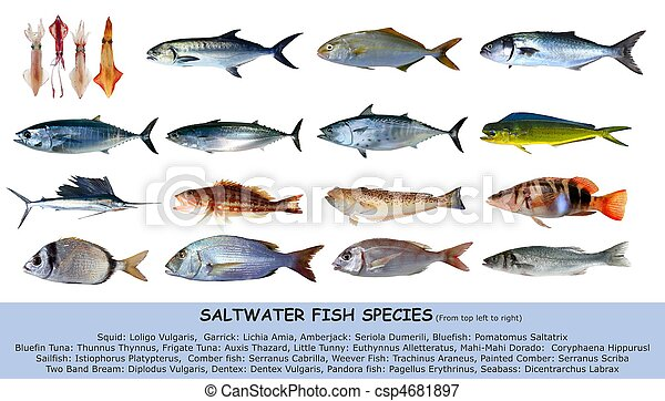 Fish species saltwater clasification isolated on white - csp4681897