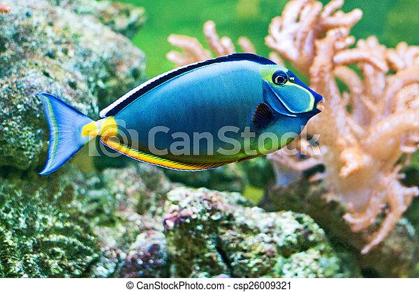 Fish - csp26009321