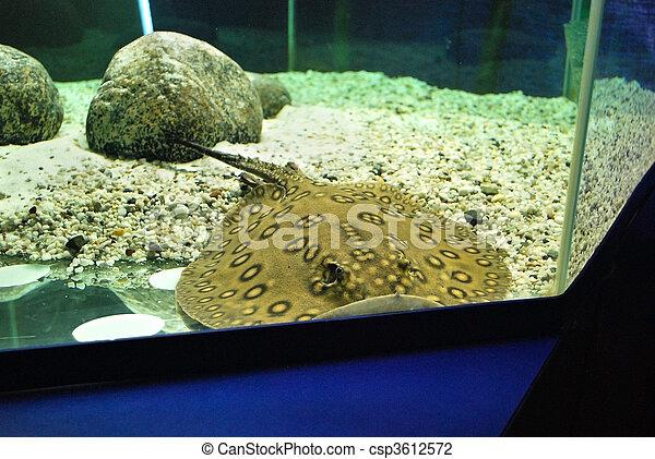 fish - csp3612572