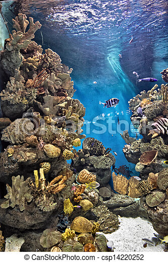 fish swims over a coral - csp14220252