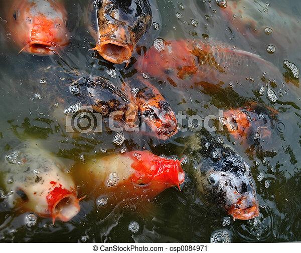 Fishes - csp0084971
