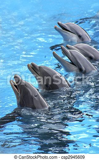 five dolphins - csp2945609