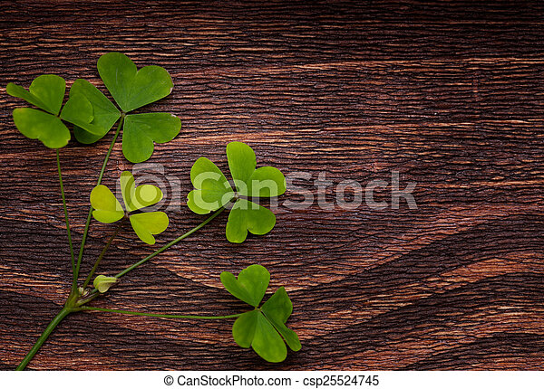 Five lucky shamrocks on a old wood vintage background - csp25524745