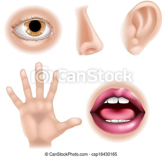 Five Senses Body Parts - csp16430165